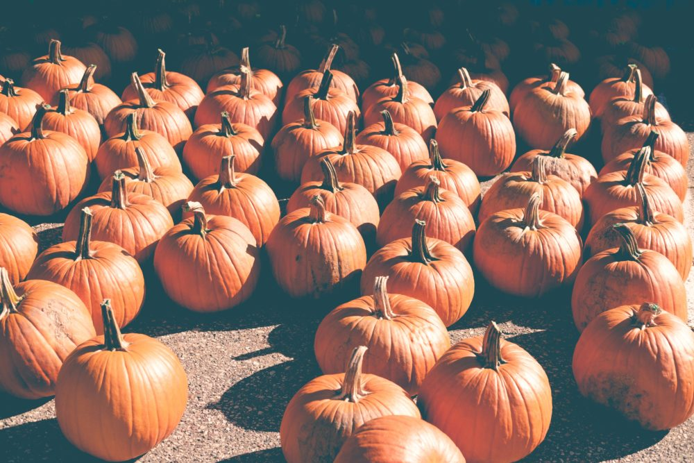 8 Reasons Fall is Our Favorite Season